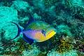 Abrolhos Marine National ParkRobertoCostaPinto30.jpg