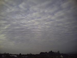 Altocumulus cloud - Image: Ac perlucidus