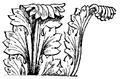 Acanthusblad, Nordisk familjebok.png