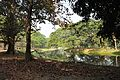 Acharya Jagadish Chandra Bose Indian Botanic Garden - Howrah 2011-01-08 9759.JPG