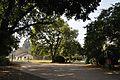Acharya Jagadish Chandra Bose Indian Botanic Garden - Howrah 2011-01-08 9824.JPG