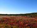 Across-the-marsh-dolly-sods - West Virginia - ForestWander.jpg