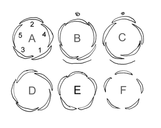 Aestivation (botany) - A diagram showing some kinds of petal or sepal aestivation in flower buds. A: quincuncial; B,C: cochleate; D: contorted; E: valvate; F: open.