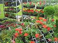 AgroBalt 2012 - gėlių augontojų turgelis2.JPG
