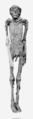 Ahmose I mummy.png