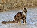 Akrotiri 01-2017 img06 StNicholas of the Cats.jpg