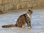 Akrotiri 01-2017 img06 StNicholas of the Cats.jpg
