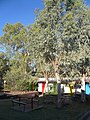 Alice Springs - Alice's Secret hostel (4099764937).jpg