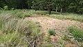 Allanaquoich Farm (Mar Lodge Estate) (16JUL17) (21).jpg