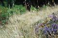 Alsace Guiguir68 01.jpg