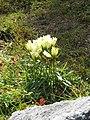 Altai0097 (93590391).jpg