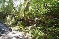 Ancient deciduous woodland - geograph.org.uk - 227726.jpg