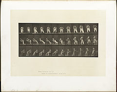 Animal locomotion. Plate 420 (Boston Public Library).jpg
