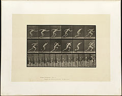 Animal locomotion. Plate 59 (Boston Public Library).jpg