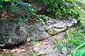 Animals in Thailand Photographs by Peak Hora (9).jpg