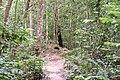 Another ventilation 'termite mound' (32015458191).jpg