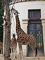Antwerp Zoo (12210690194).jpg