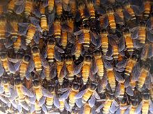 Close-up of workers on comb