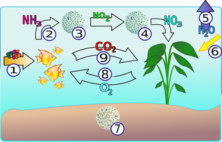 The Tank Watch Carbon Dioxide Oxygen Cycle