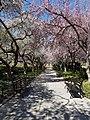 Argentan, ville fleurie, au printemps.jpg