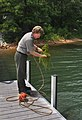 Army Corps of Engineers works to control hydrilla (26420221470).jpg