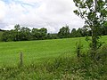 Ashwoods Townland - geograph.org.uk - 487356.jpg