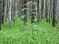 Asinovsky District, Tomsk Oblast, Russia - panoramio (175).jpg