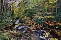 Autumn-forest-creek-foliage - Virginia - ForestWander.jpg