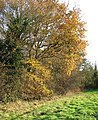 Autumn colours on the edge of a hay meadow - geograph.org.uk - 1588323.jpg