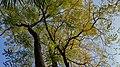Autumn season in Butanic Garden فصل پاییز در باغ بوتانیکال تفلیس 31.jpg