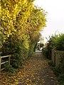 Autumnal Middle Lane, Hedon - geograph.org.uk - 600805.jpg