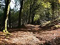 Autumnal forest path at Llantrisant - geograph.org.uk - 1009719.jpg
