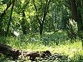 Auwald in den Donau-Auen 10.JPG