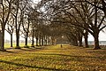 Avenue in Wandsworth Park in Autumn.jpg