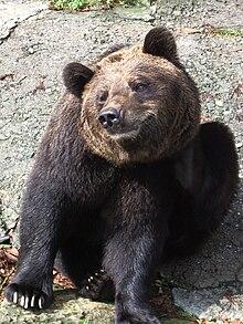 Bären große Schwänze Seifenmassage mit Sex