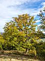 Bäume Schauinsland jm53895.jpg