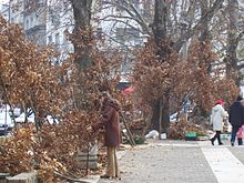 Photograph of a young woman in winter clothes arranging variously sized oak tree branches laid out around two sides of a small square. The square is surrounded by a row of trees through which large buildings of a city can be seen.