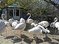 Bakı Zooloji Parkı - 07.JPG