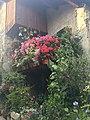 Balcon fleuri à Yvoire.jpg