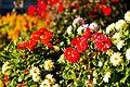 Ballarat Botanical Garden3.jpg
