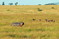 Balloon Safari 2012 06 01 3201 (7522668064).jpg