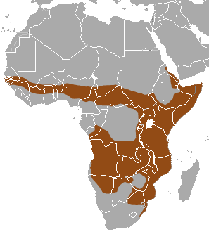 Banded Mongoose area