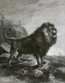 Leão-do-atlas em pintura de 1898