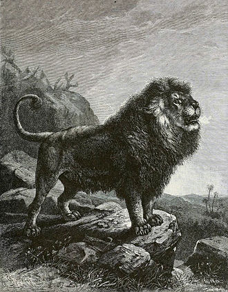 Barbary lion - Illustration by Joseph Bassett Holder, showing a thick mane that extends through the belly