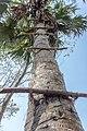 Barguna District 06.jpg