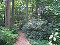 Barnes Foundation, Merion, PA - arboretum woods.jpg