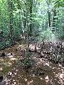 Battle Creek Cypress Swamp 31.jpg