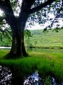 Baum am Ufer des Flusses Orchy - panoramio.jpg