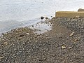 Beach, Greenock Esplanade - geograph.org.uk - 1575631.jpg