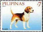 Beagle-Canis-lupus-familiaris.jpg